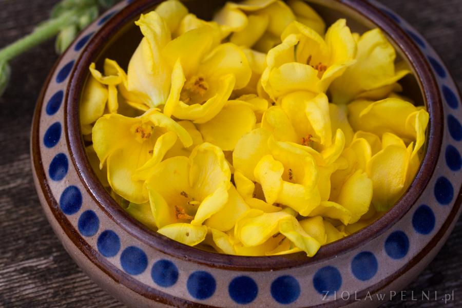 kwiaty dziewanny