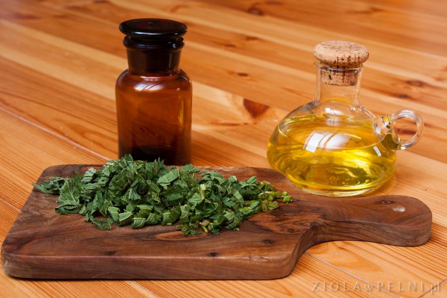 olej pokrzywowy w przygotowaniu
