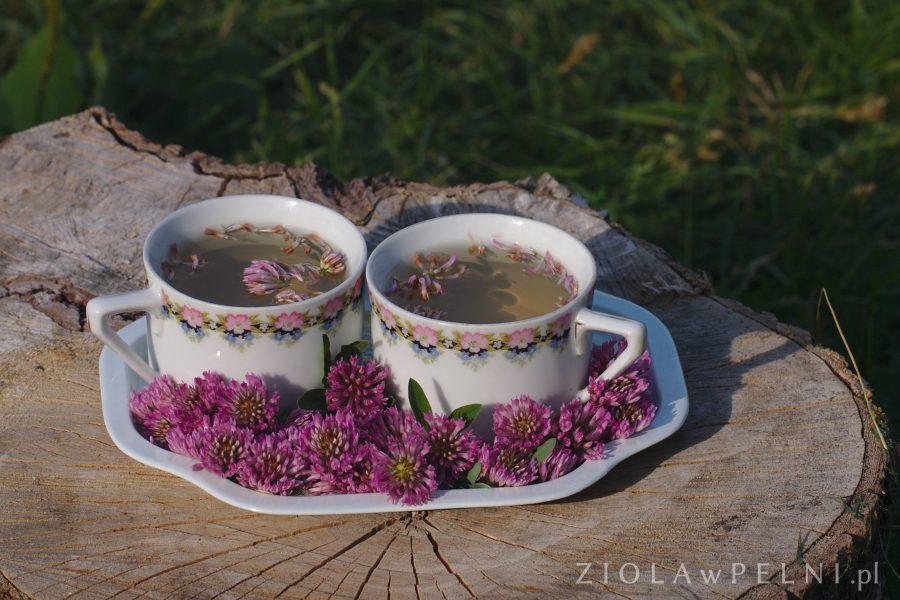 napar z kwiatostanów koniczyny